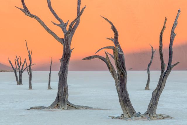 The surreal landscape of Deadvlei. Namib-Naukluft National Park, Namibia