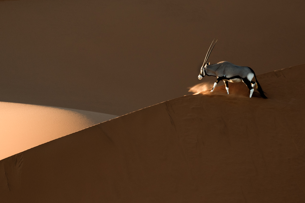 Oryx in Namib-Naukluft National Park, Namibia
