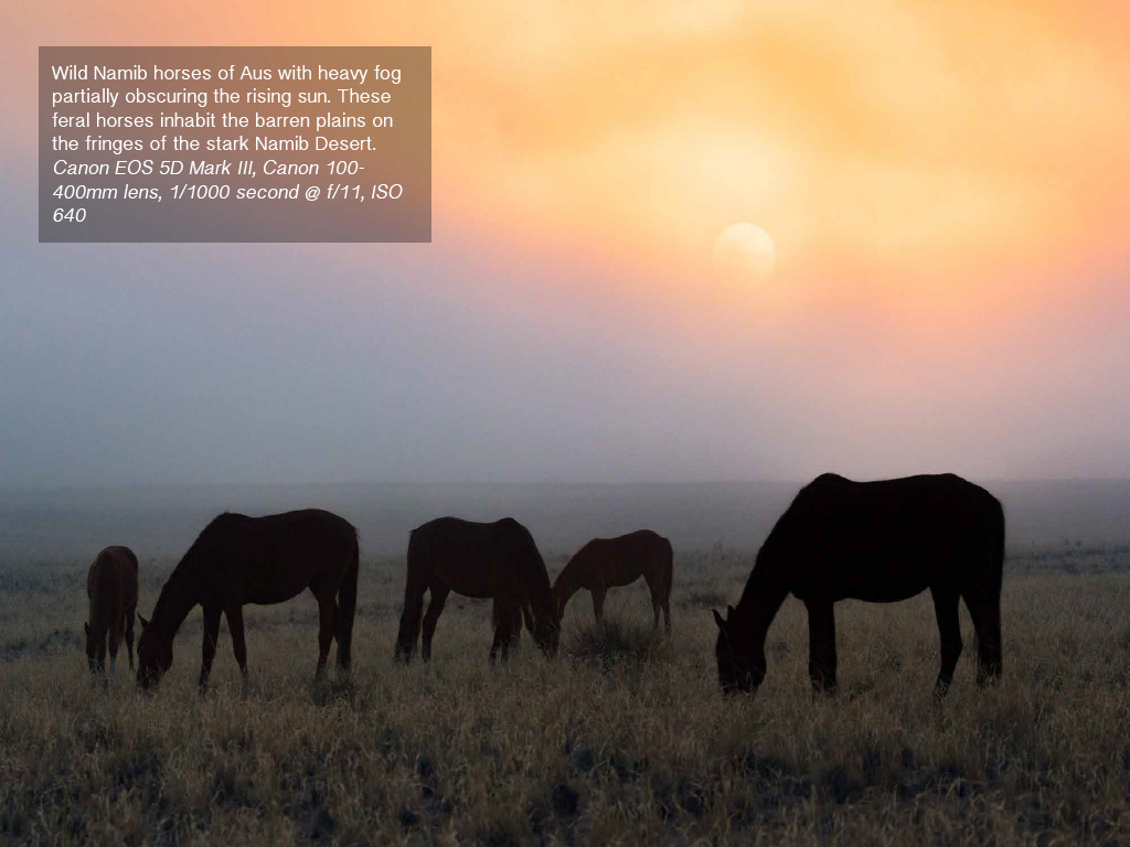 Free e book namibia impressions richard bernabe sample pages fandeluxe Images